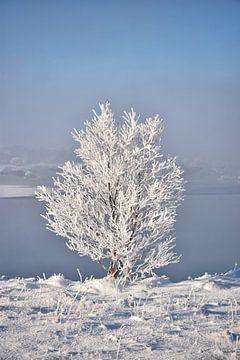 Een bevroren boom bij Myvatn van Elisa in Iceland