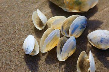 Ostseestrand mit Muscheln von Thomas Jäger