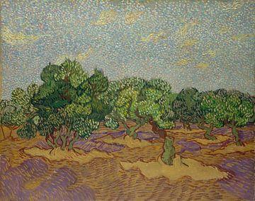 Oliviers, Vincent van Gogh sur