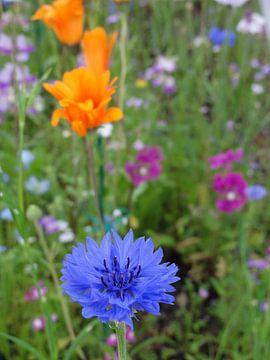 Blauwe korenbloem von Lotte Veldt