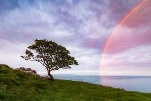 Baum am Meer von