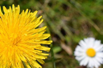 Bloemen in het gras sur Froukje Hobma