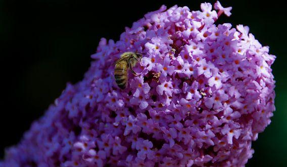 Een wesp op een vlinderplant
