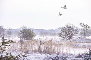 Fliegende Gänse von Sebastiaan van Stam Fotografie