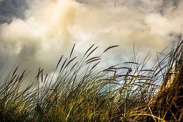 Dünengras von Oscar Limahelu