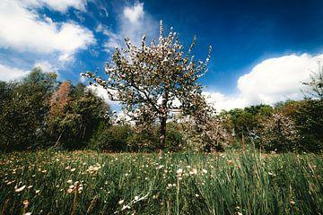 Blühender Apfelbaum auf einem Feld von Niels Eric Fotografie