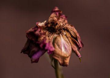rose foncé sur Tania Perneel
