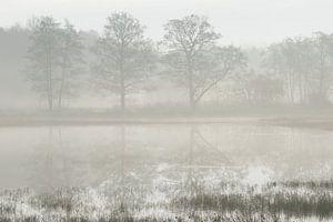 Bomen in reflectie op een mistige ochtend van