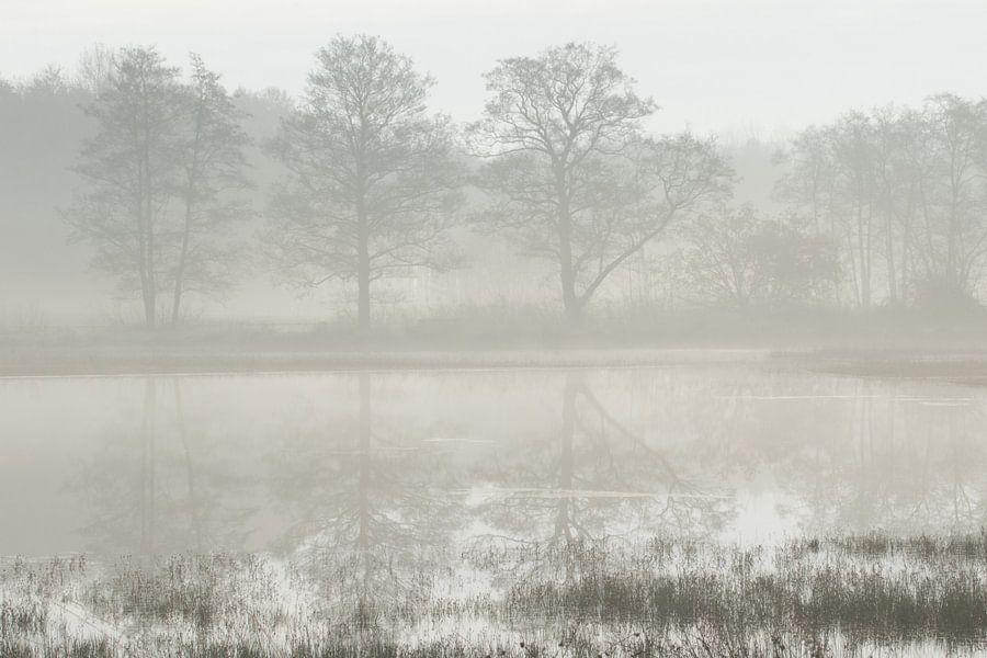 Bomen in reflectie op een mistige ochtend van Art Wittingen