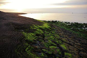 Texel Zeezicht 031