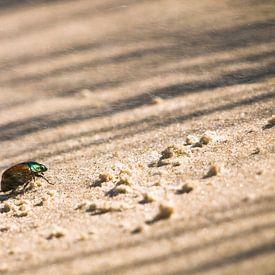 Kever op het strand van Steven Boelaars
