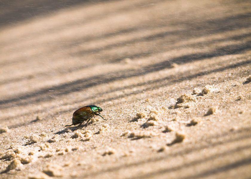 Kever op het strand