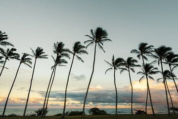 Kauai Palms von road to aloha