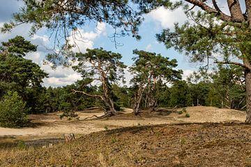Landschaft von Hans Aanen
