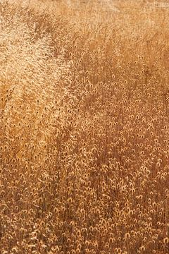 Droog gras. van Rens Kromhout