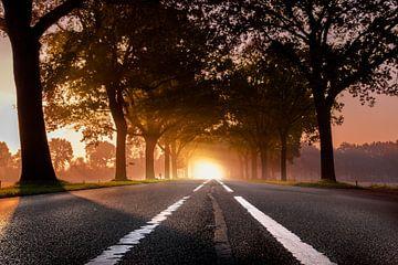 Nebel am Morgen von Jeroen Mondria