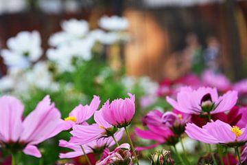 veld met lila bloemen van Gerrit Neuteboom