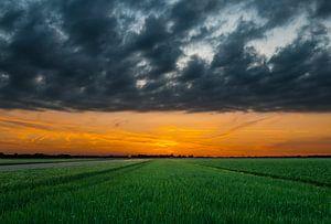 Zonsondergang over de velden van Nieuw Vennep van