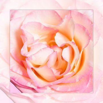 silence of the rose van Tessy Graas