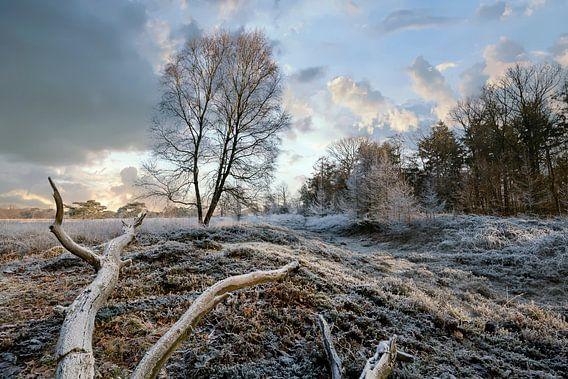 Boom in winterlandschap van Peter Bolman