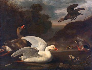 Gänse und Enten, Johannes Spruyt
