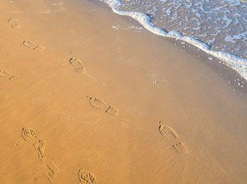 Voetafdrukken op het strand van Animaflora PicsStock