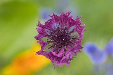 Abstrakter Hintergrund mit einer violetten Kornblume von J..M de Jong-Jansen