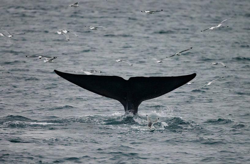 De staart van de Blauwe Vinvis van Menno Schaefer