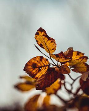 Feuilles d'automne sur Pim Haring