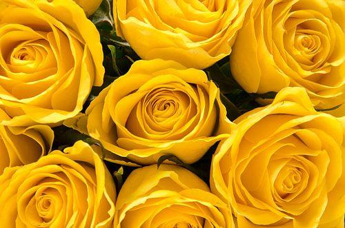 Zeven gele rozen