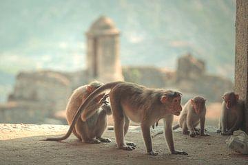 Affe im Tempel von Edgar Bonnet-behar
