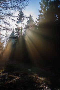 Mysterieus Bos van Bert van Wijk