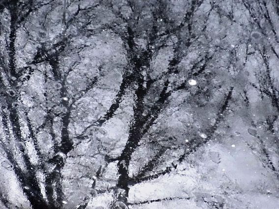 Tree Magic 28