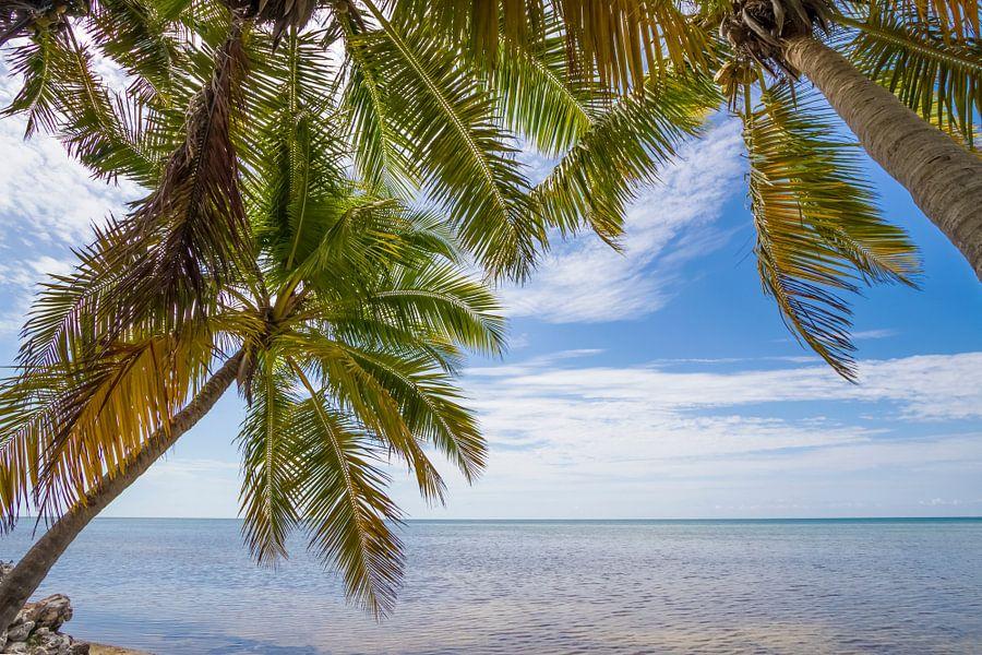 FLORIDA KEYS Ocean View van Melanie Viola