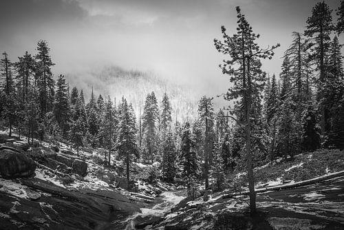 Reuzen door mist bedekt van