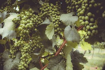 Druiven van Mi Vidas Fotodesing