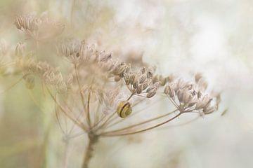 Garden dreamworld van Birgitte Bergman