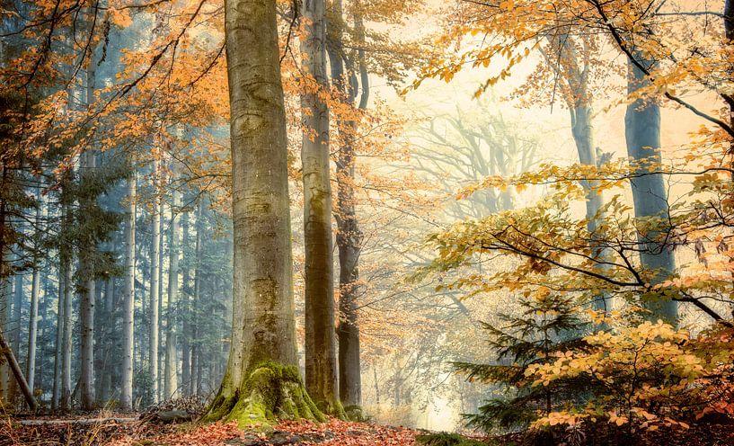 fantasie bos van Fabrizio Micciche