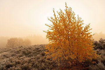 Heide-Landschaft mit kleinen Birken mit leuchtend gelben Blättern von Sjoerd van der Wal