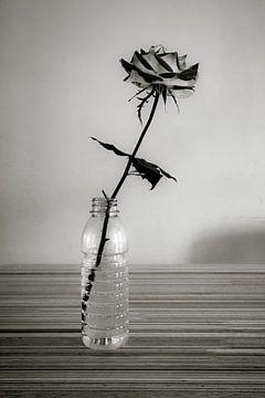 Roos in plastic flesje von Peter Bouwknegt