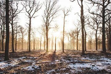 Winterzon van Thijs Pausma