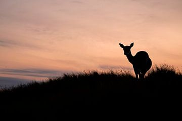 Damhirsche bei Sonnenuntergang von Edwin Butter