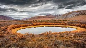 Toendra landschap in de herfst van
