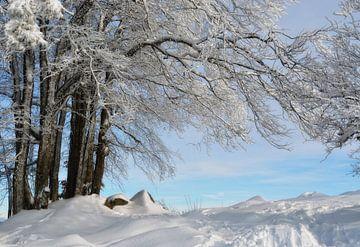 Winterzeit von Claudia Moeckel
