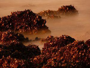 dromerige zee van