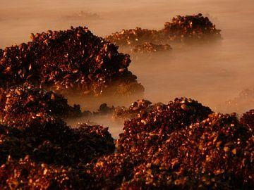 dromerige zee van erik boer