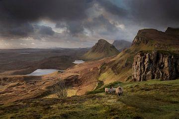 Mitesser-Schaf Schottland von Marc van Kessel