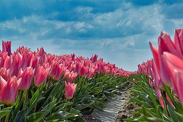 Tulipfield von Fred Knip