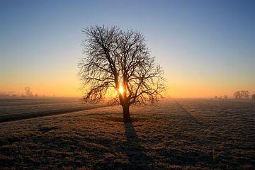 De eenzame boom von Stephan Neven