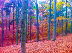 Wald Ich liebe diesen Ort